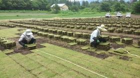 こちらは6月の芝切りの様子です(^^)  ここの畑は出荷出来ない芝(通称 カス)がよく出るんだよね・・・・結束にも時間がかかるし、後片付けも大変・・・(-_-;)チッ・・・・