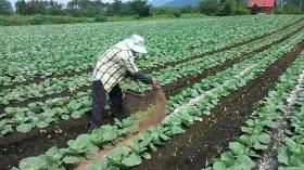 三女が有機質肥料をふっております! 1年目のペーペーのくせに・・・ 2年目の次女よりもはるかに上手い・・・!Σ( ̄☐ ̄;) ナゼダ・・・・