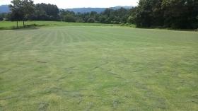 散髪後の芝畑です(^^)b 芝の葉が散らばっているのがわかります? お天気が良いと、すぐに葉がカラカラになるんですよ~(^^)