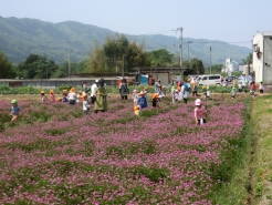 5/1 れんげ畑に保育園の子供達が遊びに来ました
