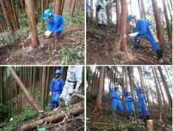 初日に体験した年数の若い木を手入れする保育作業とは違い、ある程度大きくなったヒノキを間伐(伐倒)する作業を行いました。