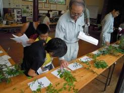 午後から学年ごとのグループに分かれ、形・色・匂いなど、 採取してきた葉っぱと図鑑を見比べ勉強中。