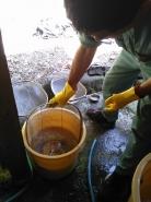 すると、すぐに沈むモミと浮き上がるモミに分かれます。浮き上がったモミは、ざるで速やかに回収し、選別します。