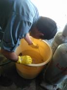 袋のまま、お湯の入ったバケツへ入れ、湯温消毒に移ります。この湯温消毒は、「イネばか苗病」「いもち病」「苗立ち枯れ細菌病」など、細菌性の病気を防除するために実施するものです。 この湯温消毒の利点は、農薬を使用せずにモミを消毒できるところ。ここから温度計とにらめっこが始まります。8分間程度ですが、60℃をキープするため、温度が下がればすぐにお湯を足します。