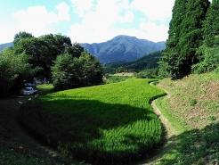 田んぼから後ろを振り返ると、こんな感じの景色が広がっていました。