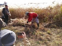 2日目は、茅刈り講習会です。蒜山の茅場へ移動し、刈り取りから束ねるまでの技術をレクチャーして頂きました。