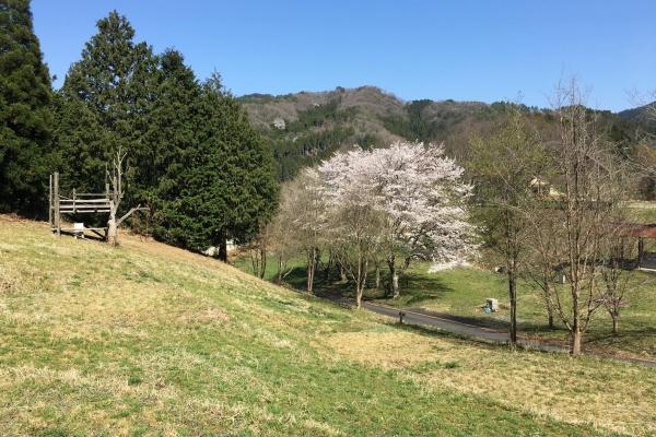 春は桜を楽しむこともできます。