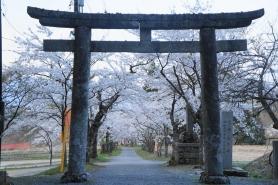 茅部神社(平成26年4月20日撮影) 神聖な空気を感じます。