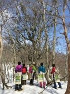 森の奥深くのブナやナラの巨木や奇木に出会えるのもこのツアーの魅力。