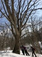 樹の生命エネルギーをおすそ分けいただいております。